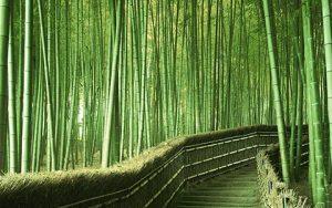 Bambus - et yderst bæredygtigt materiale