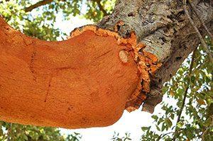 Kork er et yderst bæredygtigt og genanvendeligt materiale