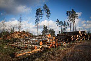 Træ - bæredygtighed afhænger af genplantningsgraden
