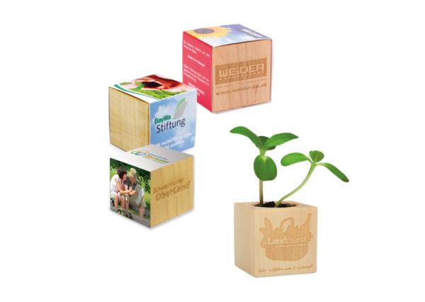 Bæredygtig og levende firmagave i ahorn. Urtepotte med jord og plantefrø